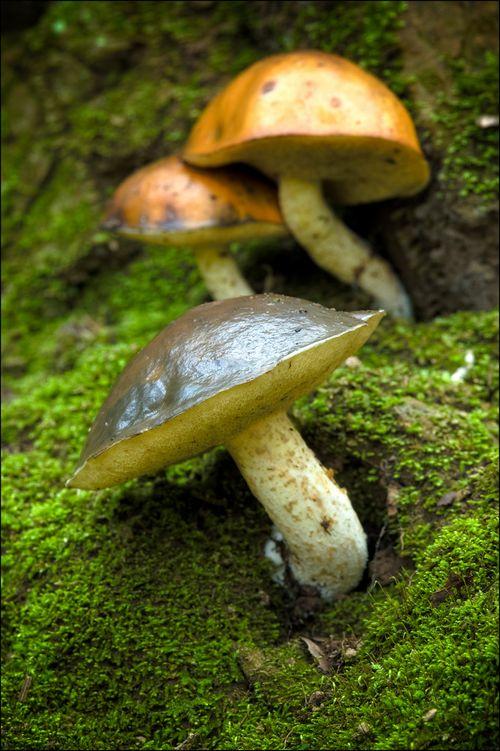 Mushroomtown